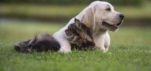 Health Benefits Of Pet Supplements