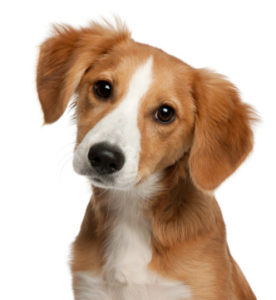 Pet Supplements Contract Manufacturing for Animal Products
